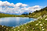 Fototapety Lago e campo di fiori