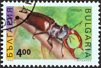 Stag beetle (Bulgaria 1993)