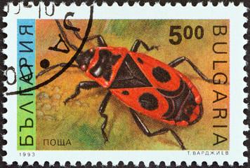 Firebug (Pyrrhocoris apterus) (Bulgaria 1993)