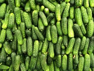 turşuluk salatalık