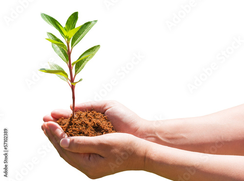 seedling in hand on white background