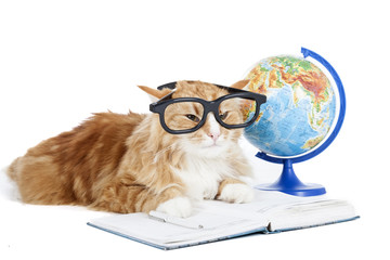 cat in glasses with a globe on a white background in studio