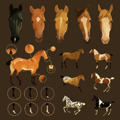 Horse markings