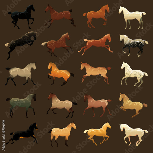 Horse coat colors