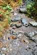 wet stones at mountain path