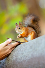 The man feeds a squirrel in park