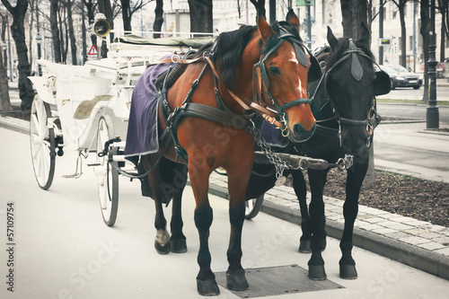 Horses and carriage