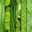 Collage of green grass and leaves.