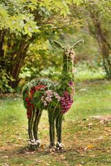 flowers lama