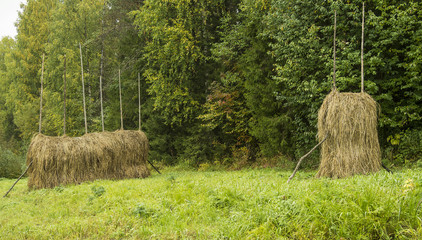 two haystack in green, wet meadow