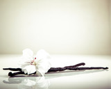 Fototapety Vanilla Bean And Flower