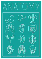 Anatomy pictogram set (12 pcs)