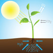 Scheme of photosynthesis