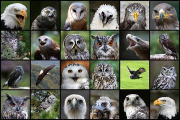 Greifvögel / Eulen