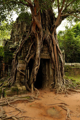 Angkor - Ta Som, The third eastern gopura, strangler fig