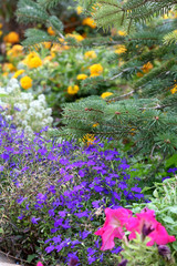 Close up view of a flower garden