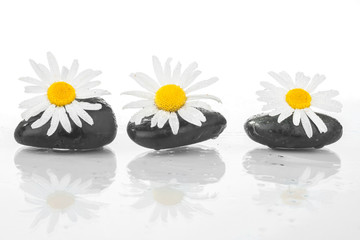 Three stones with daisies on the water