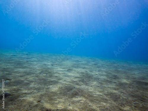 Fotobehang Koraalriffen Sandy seabed