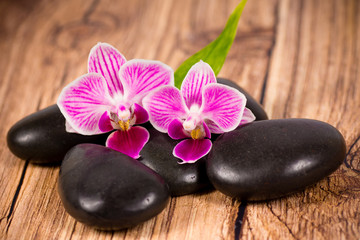 Stones and orchid on wooden background