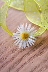 Weiße Blüte auf Holz mit Textfreiraum