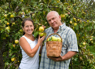 man and woman with  basket of apples