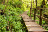 Rain Forest Boardwalk 1