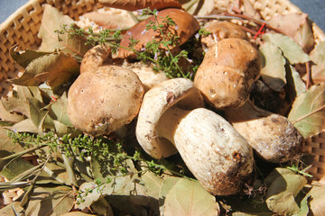 Boletus mushrooms in a wicker basket - close up
