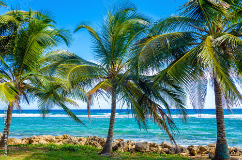 Palm Trees and Sea