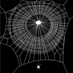 cobweb vector on black background