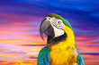 macaw papagay against dawn sky