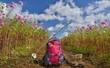コスモスと青空のハイキング