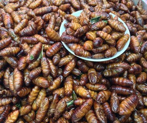 fried insect in thailand
