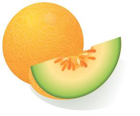 Ripe melon. Vector.