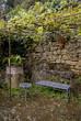 treille, vigne, Jardin de Cadiot, Carlux, 24, Dordogne