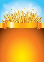 Wheat on golden ribbon vector background