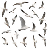 birds collection isolated on white Kanvas Tablo