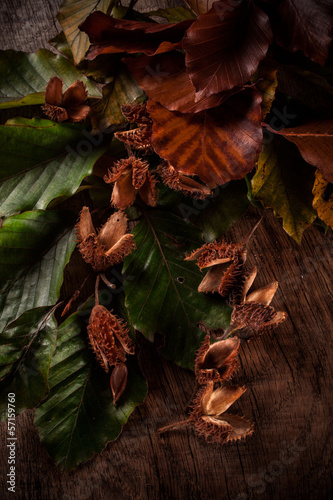 beechnuts on wooden table