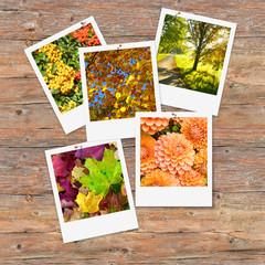 Herbst, Fotos, Hobby, Fotografieren, Sofortbild