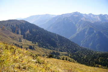 The slope of the mountains, forested, Abkhazia