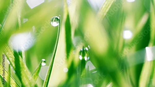 Dew drops on green grass