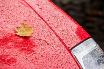yellow leaf on the wet red car hood