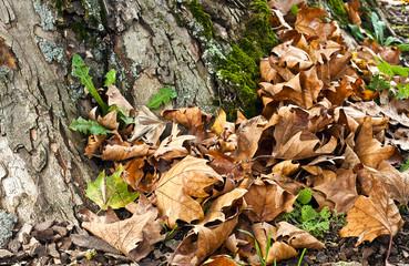 autunno cadono le foglie