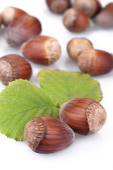 hazelnuts isolated on white