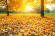 Colorful sunlighted autumn park