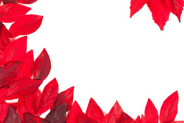 Red leaves isolated