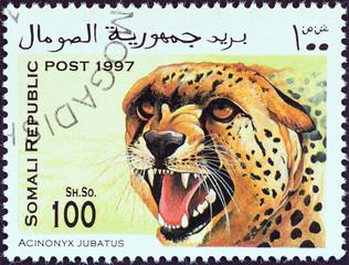 Cheetah (Somalia 1997)