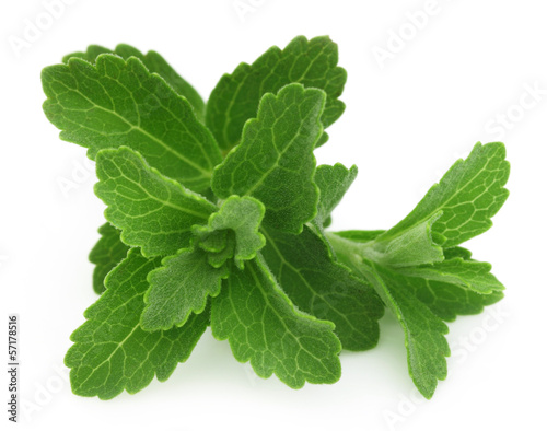 Stevia isolated over white background
