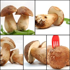 collage of mushroom, boletus