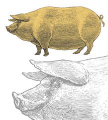 Pig in vintage engraved style