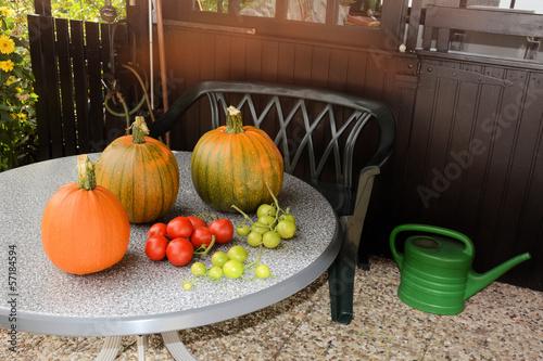 Erntezeit (Kürbisse und Tomaten)